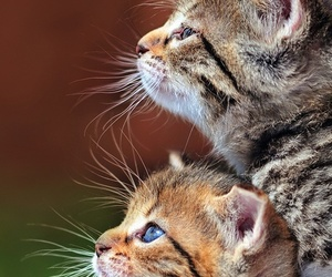 cat, pets, and cute image