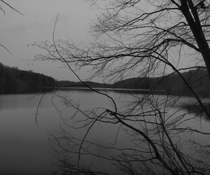 black and white, photography, and xmas2010 image