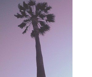 california, photography, and vogue image