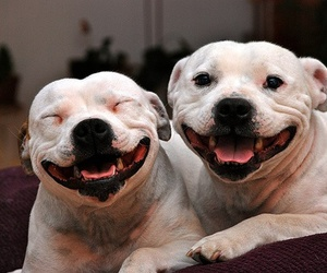 dog, smile, and puppy image
