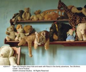 bear, teddy, and cute image