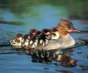 duck, baby, and water image