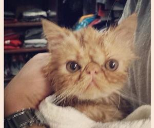 tuts and justin bieber image