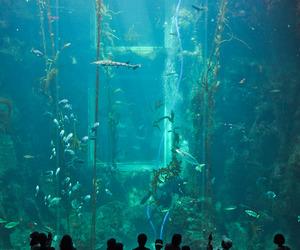 aquarium, fish, and water image