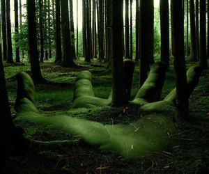 amazing, earth, and forest image