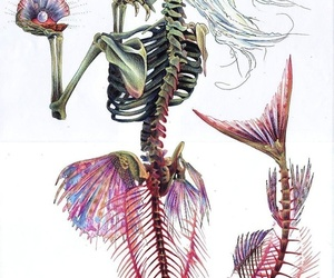 mermaid, skeleton, and skull image