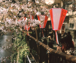 asia, beautiful, and flowers image