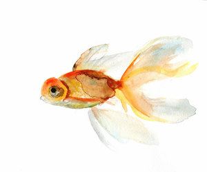 drawing, golden fish, and painting image