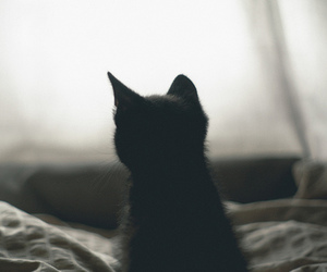 cat, hipster, and cute image