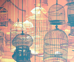 cage, colors, and lights image