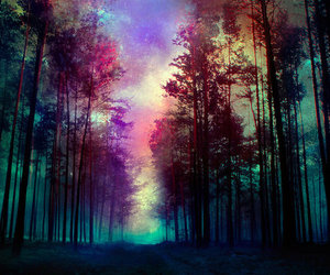 colours, forest, and magic image