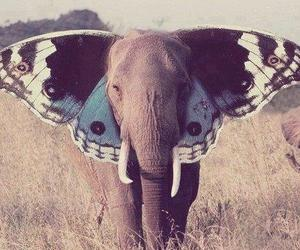 beautiful, butterfly, and elephant image