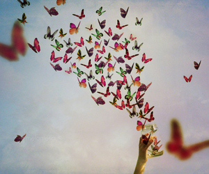 butterfly, sky, and free image