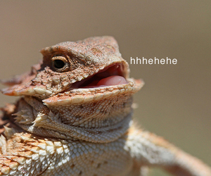funny, lizard, and lol image