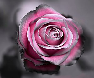 beautiful, pink, and black image