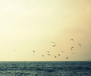 birds, sky, and photography image