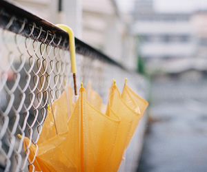 umbrella, yellow, and photography image