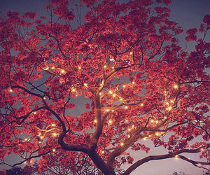 tree, light, and pink image