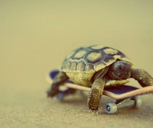 turtle, skateboard, and skate image