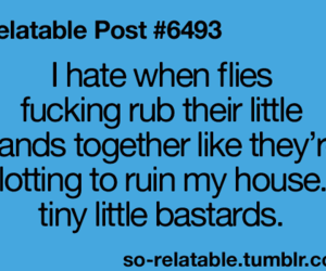 flies, funny, and quote image