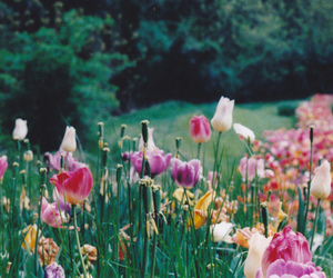flowers, nature, and strong image