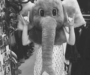 elephant, paradise, and black and white image