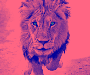 hipster, lion, and indie image