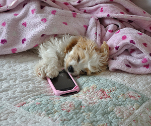 cute, dog, and pink image
