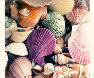 shell, sea, and nature image
