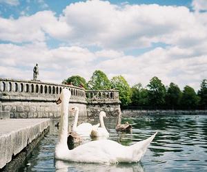 Swan, photography, and lake image