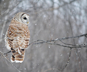 owl, winter, and snow image