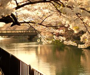 beautiful, flowers, and tree image