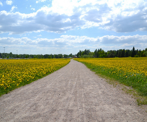 blue, field, and finland image