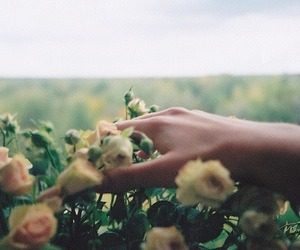 beautiful, hipster, and flowers image