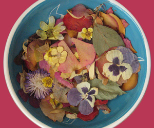 dried, pansy, and rose image
