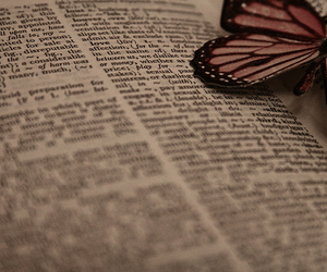 butterfly, dictionary, and photography image
