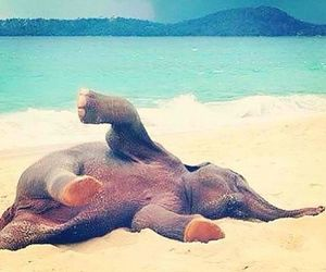 elephant, beach, and baby image