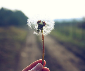 alone, dandelion, and field image