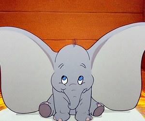dumbo ears image