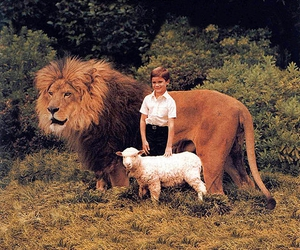lion, boy, and sheep image