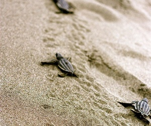 beach, sand, and turtle image
