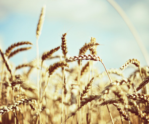 photography, beautiful, and cereals image
