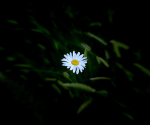 flower, photography, and wild image