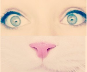 cat, eyes, and cute image