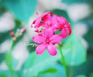beautiful, flower, and light pink image