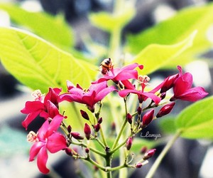 bee, flowers, and gray image
