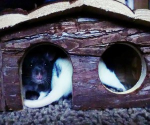 house, rat, and sweet image