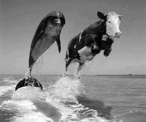 cow, dolphin, and funny image