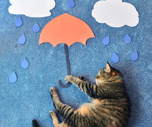 cat, rain, and umbrella image