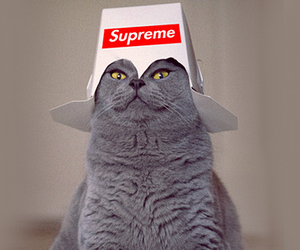 cat, supreme, and funny image